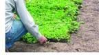 Vegetatielaag Hellend Dak